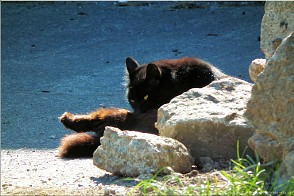 Cat in the sun, Botrea Farm, Cornwall. Photo Botrea-27486