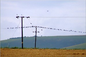 Starling conference, Wiltshire | Photo Cropcircles-20672